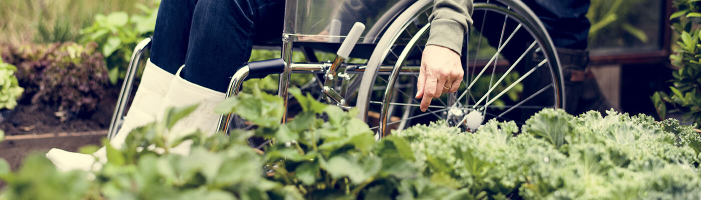 Wheelchair Friendly Garden
